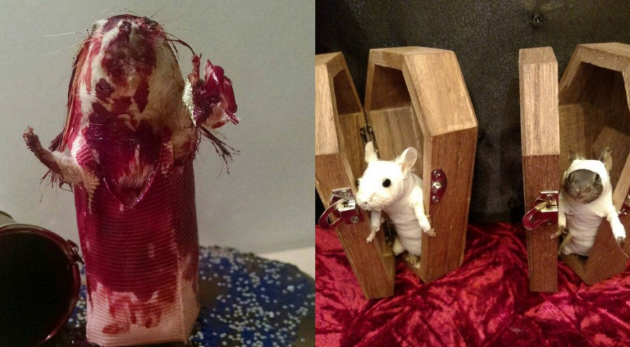shockyou-rachel-garcia-souris-walking-dead-zombie-taxidermie-3