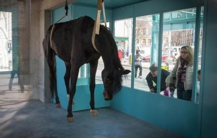 cheval-mort-suspendu