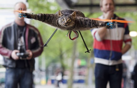 chat-quadrorotor-empaille-volant-helicoptere-shockyou