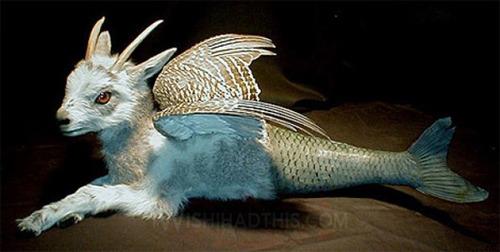 gomez-de-molina-animaux-empailles-morts-taxidermie-croisement-14