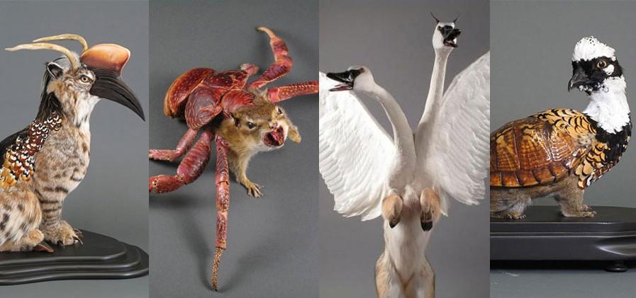 gomez-de-molina-artiste-taxidermie