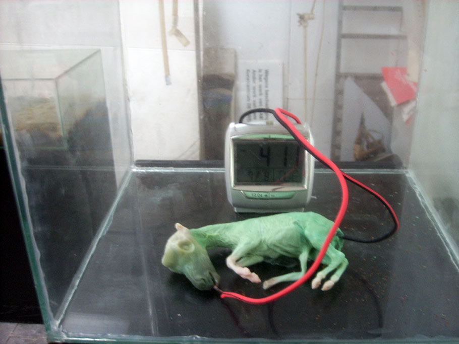 martin-uit-den-bogaard-lfoetus-cheval-mort